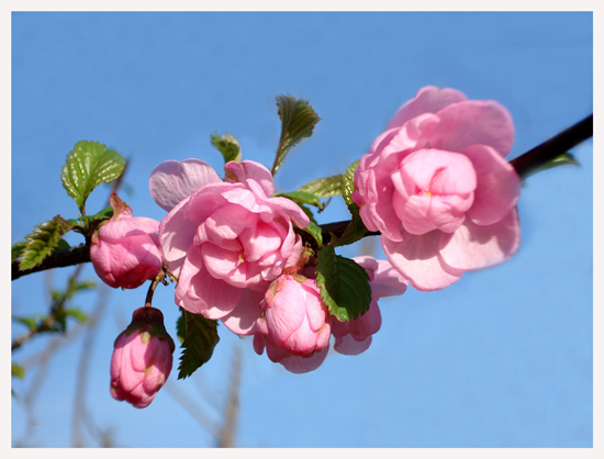 美一作品:春天