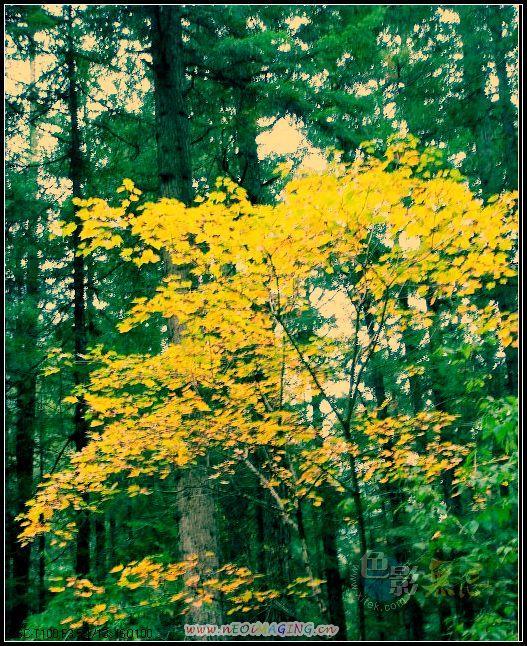 美一作品:秋