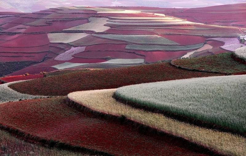 朗摄游作品:红土情