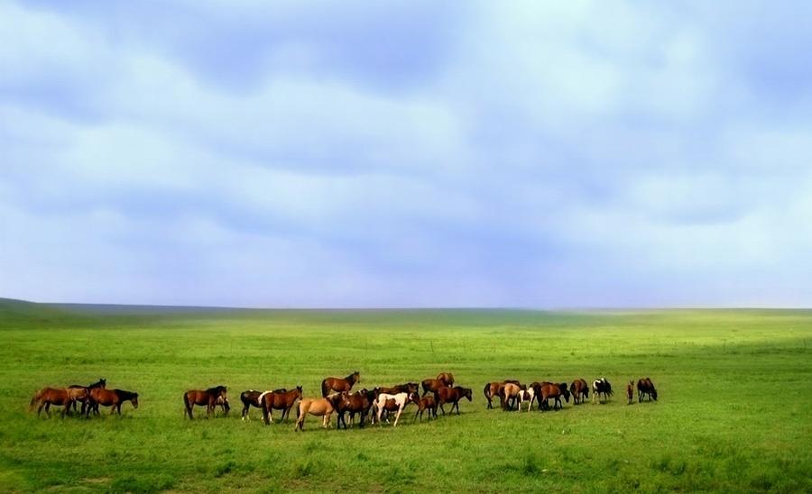 泰山野草作品:牧马区