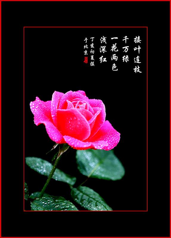 玫瑰花作画步骤