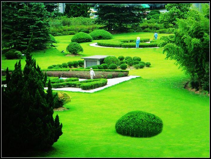 美一作品:草坪
