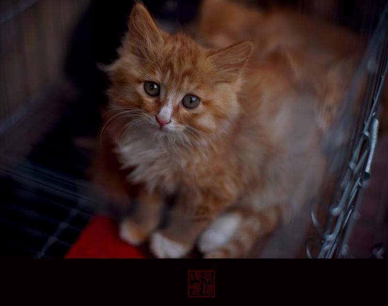 晕床的橘子作品:《被囚禁的猫》1