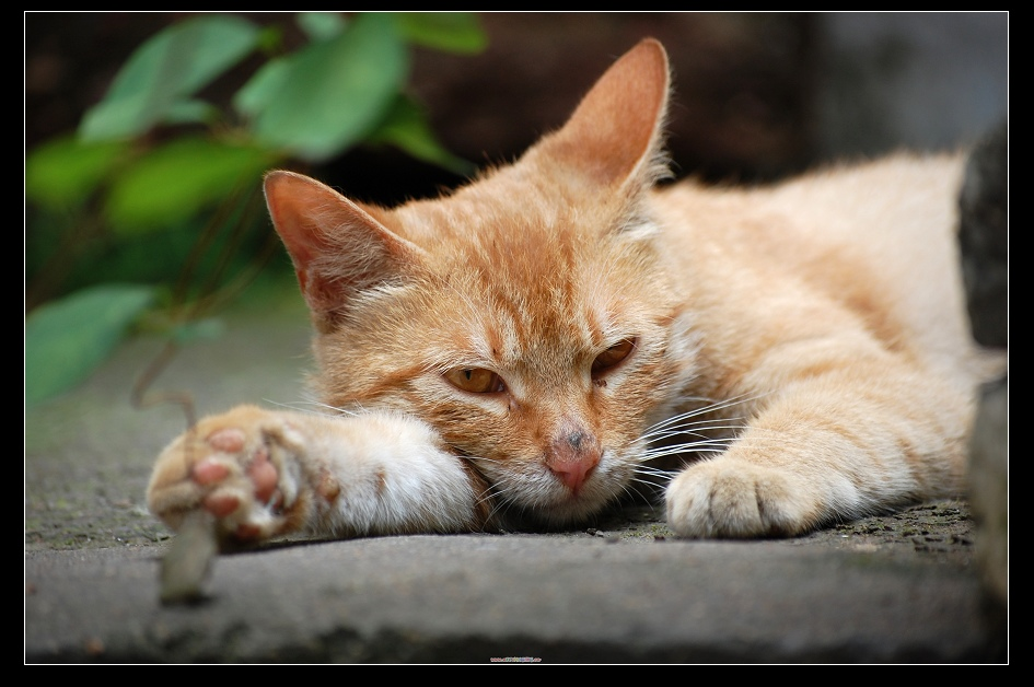 EPITOMICS血管作品:懒猫