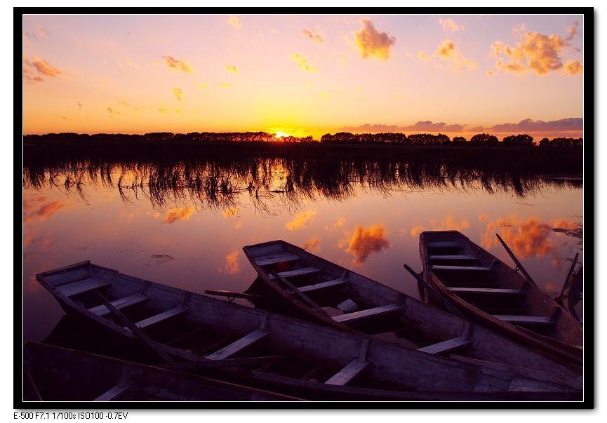 马前草作品:夕阳湿地