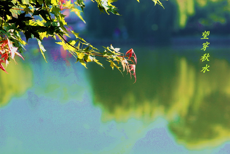 顺文作品:秋水
