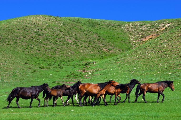 颜明玉作品:漫步的马儿