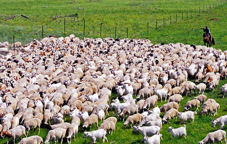 颜明玉作品:转场的羊群