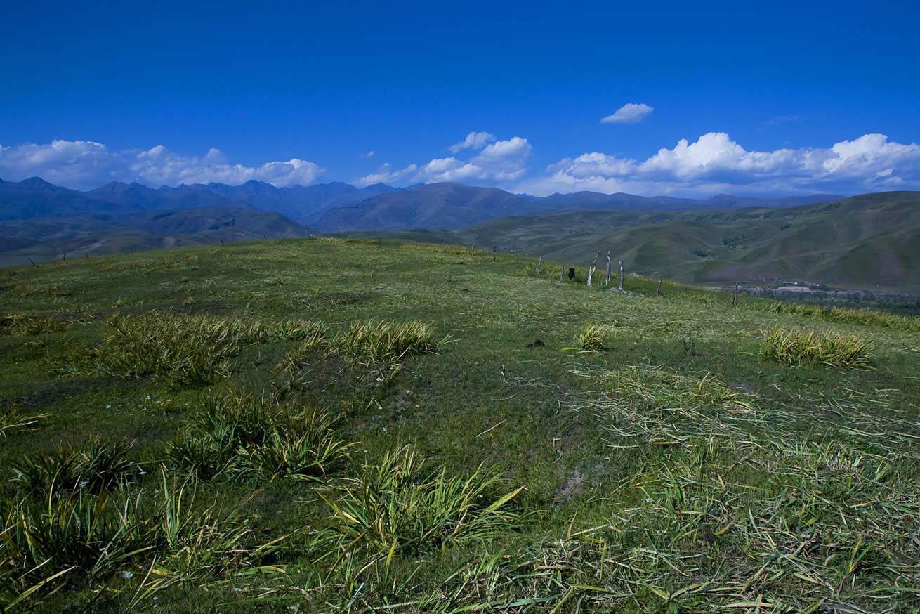 huxian作品:新疆那拉地大草原风光6