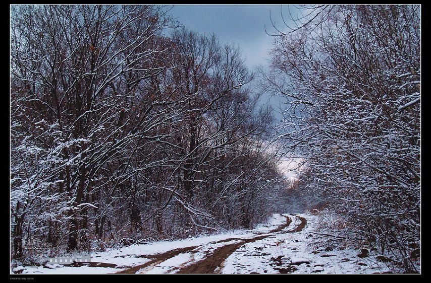 马前草作品:走进冬季