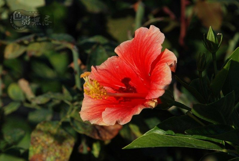 Joycexu作品:花