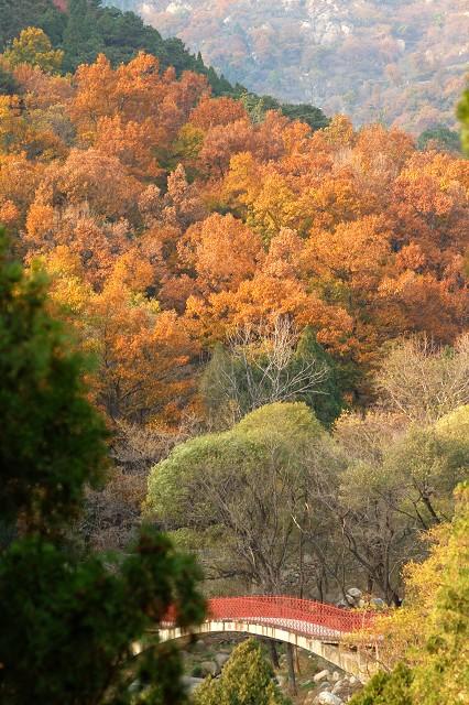 金色秋天摄影作品 秋天的色彩