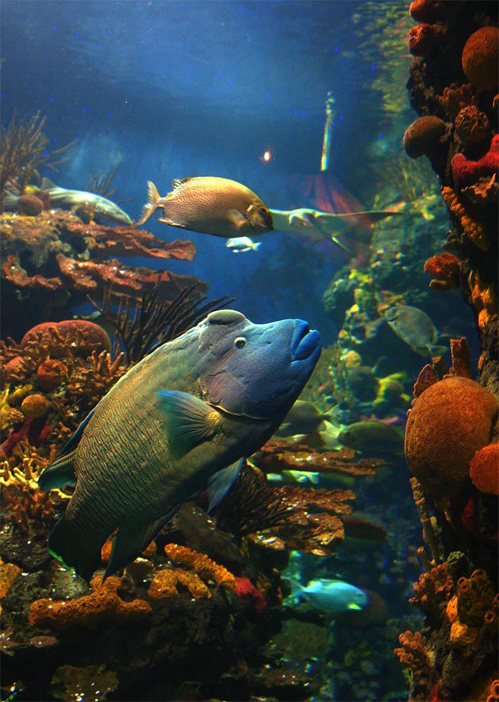 dennisx作品:另外一条鱼