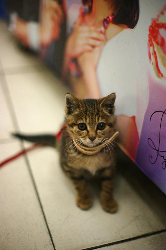 dennisx作品:便利店里的小猫