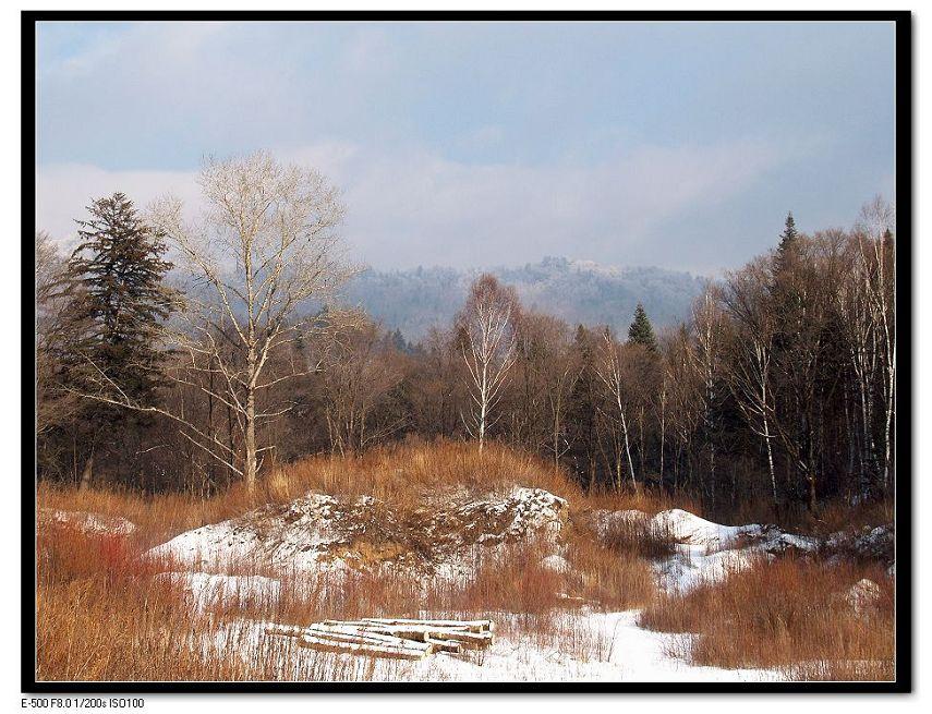 马前草作品:林区一景