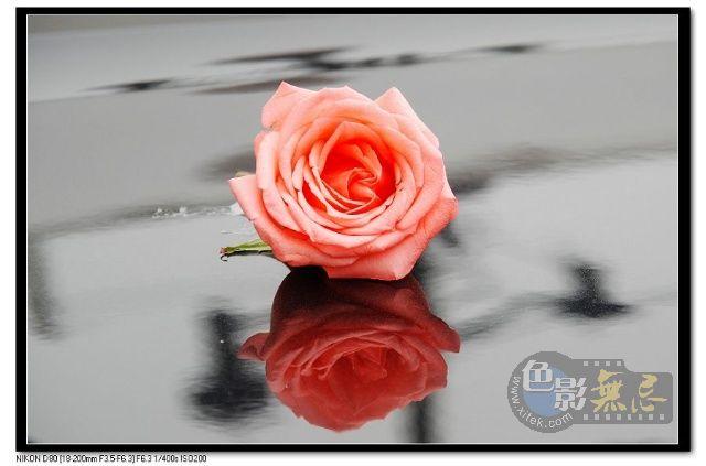 紫晓8作品:香槟.玫瑰