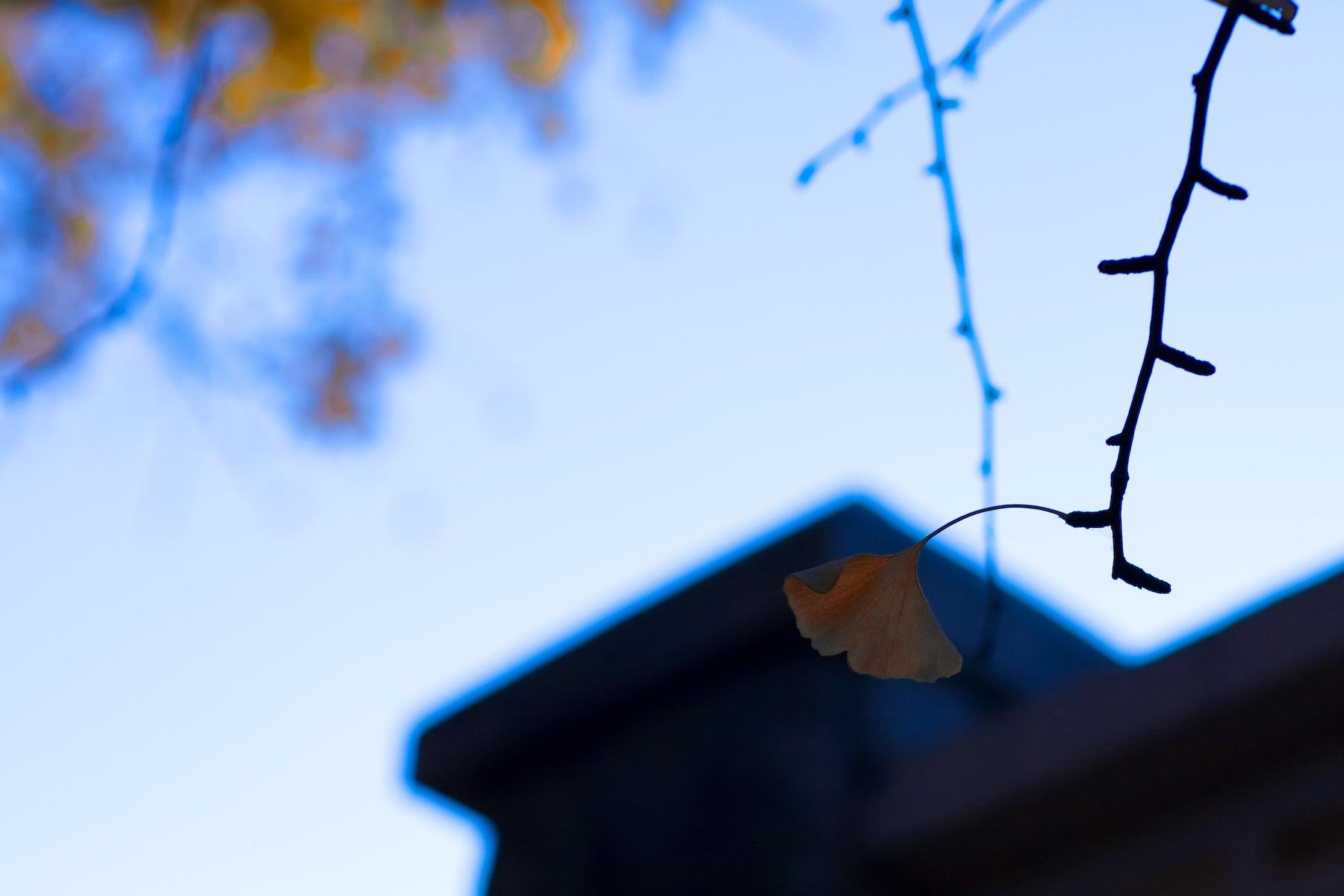 郭九麟作品:一片树叶