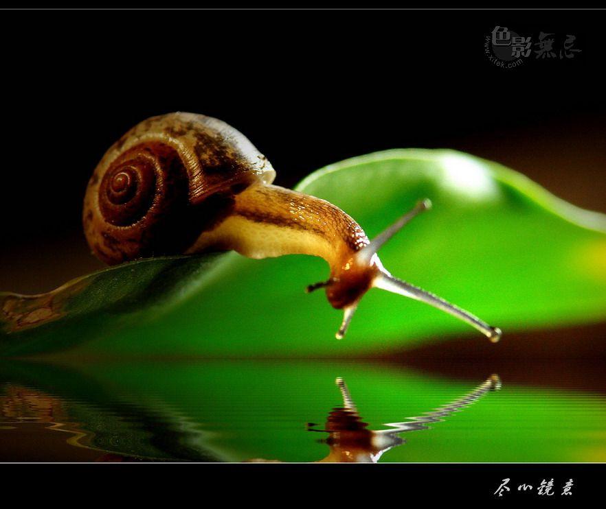尽心镜意作品:爱美的蜗牛