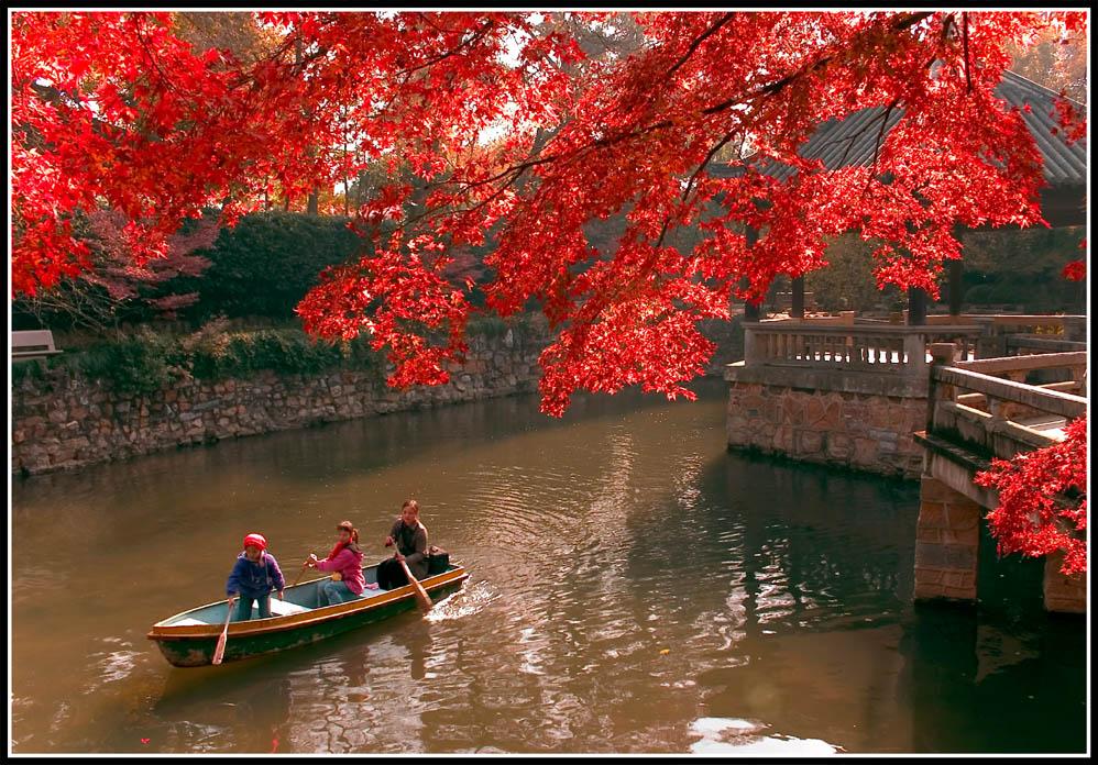 cs华东作品:<<荡漾在秋色中>>