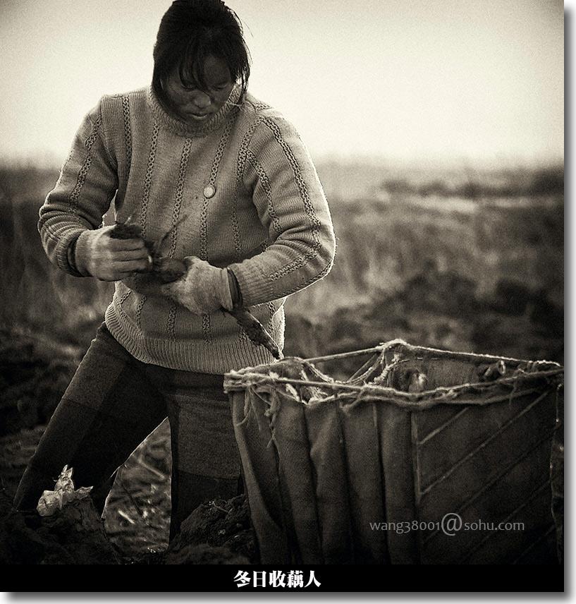 莽昆仑·介然作品:冬日挖藕人
