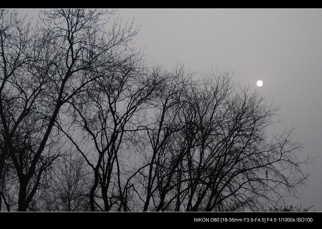 谷香谷色作品:冬日的太阳