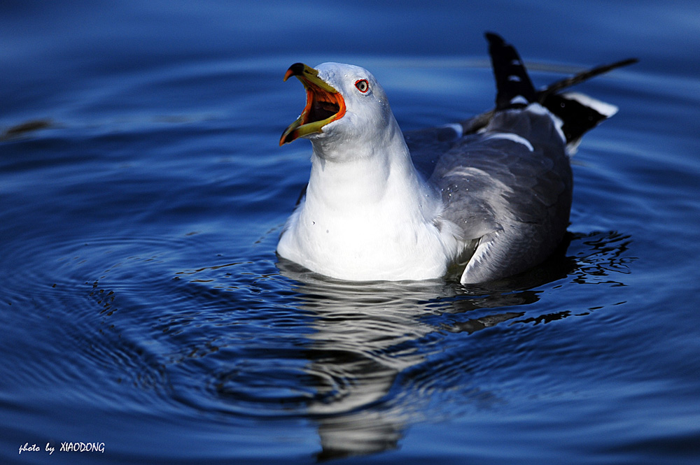 东视点作品:海鸥
