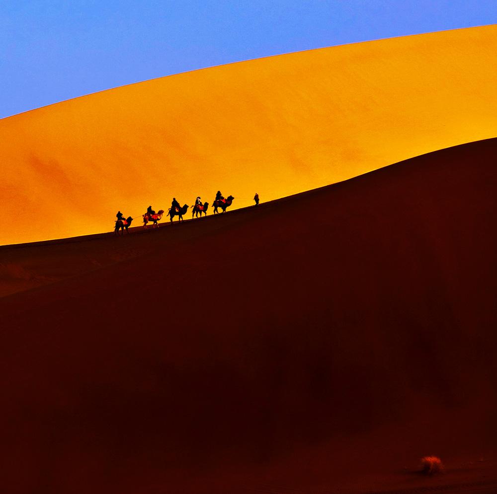 哈苏侠影作品:沙·骆驼与光