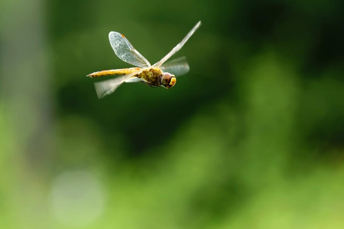 菜都菜鸟作品:蜻蜓