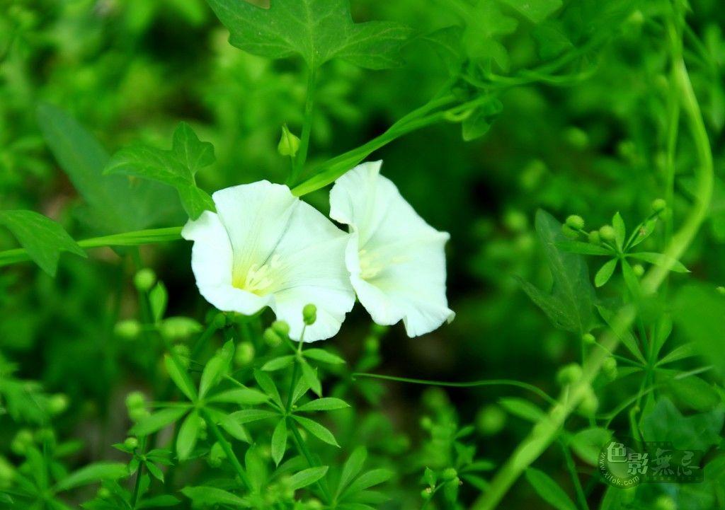 yhp4040588作品:花卉