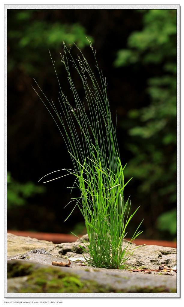 小程的故事作品:不屈的小草
