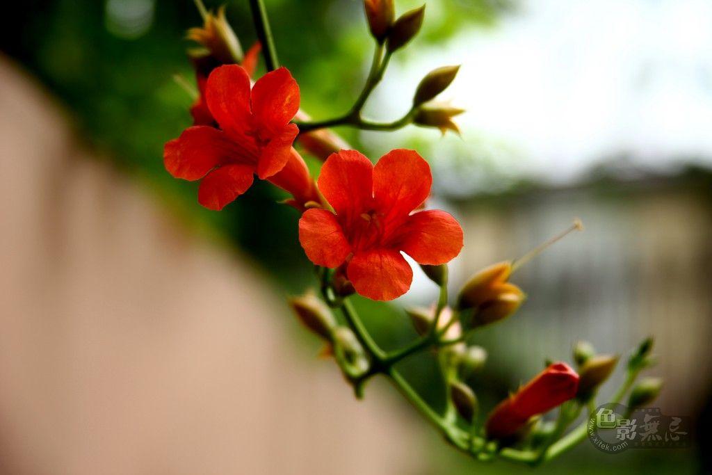 yhp4040588作品:花卉组图