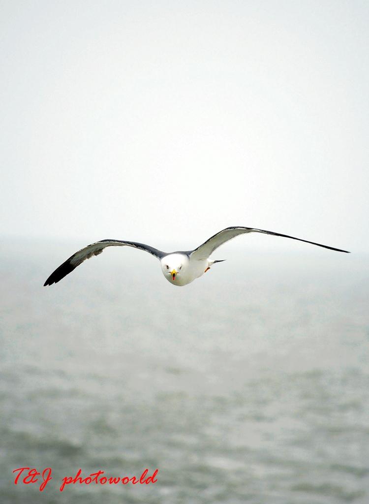 EPITOMICS血管作品:海鸥