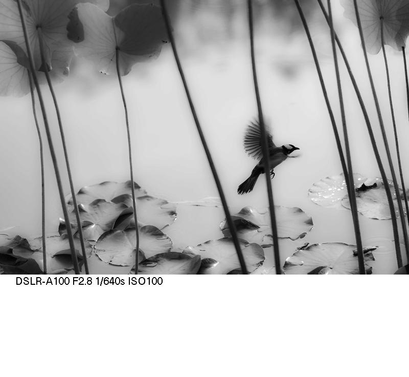 了扎咧作品:蓬间雀
