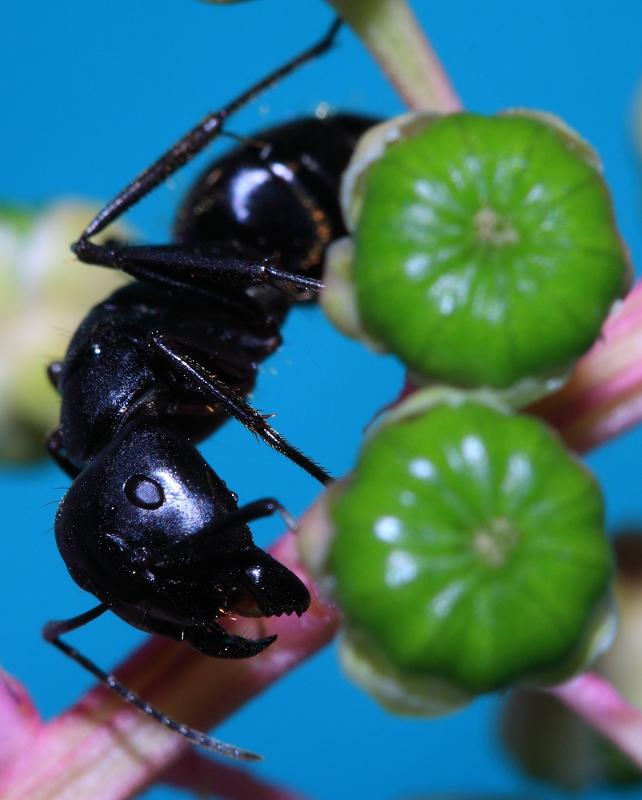 林叶斋作品:蚂蚁
