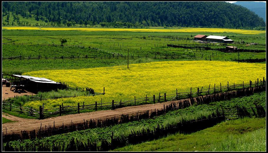 马前草作品:栅栏内的风景