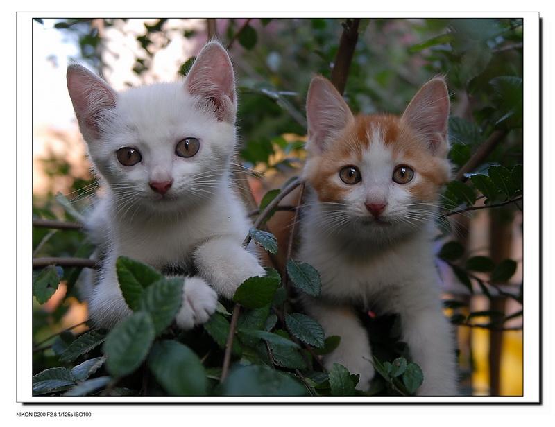 注册:2008年12月 可爱的猫咪