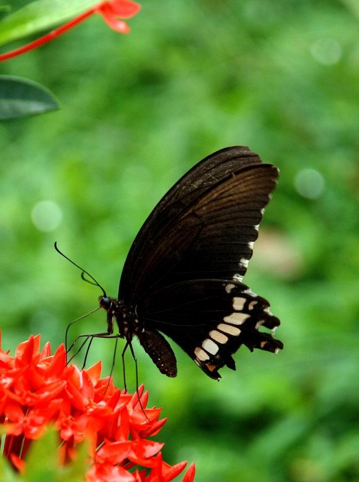 zyjch8899作品:蝴蝶