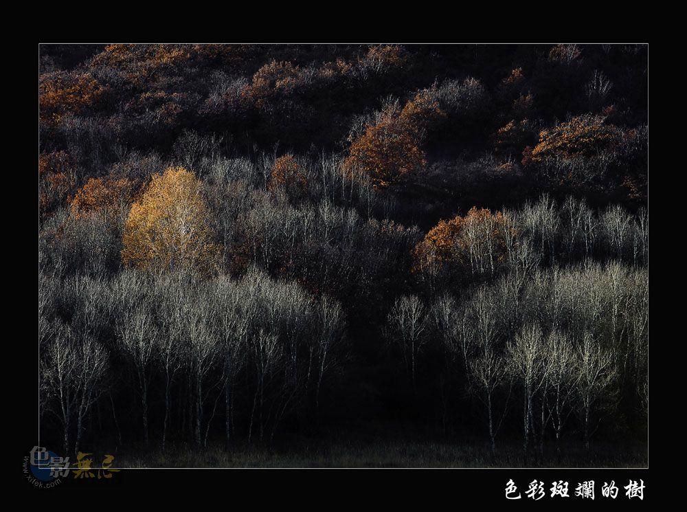 云中龙舞作品:色彩斑斓的树