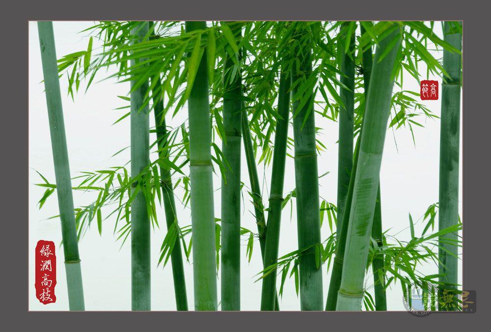 云中龙舞作品:竹报平安