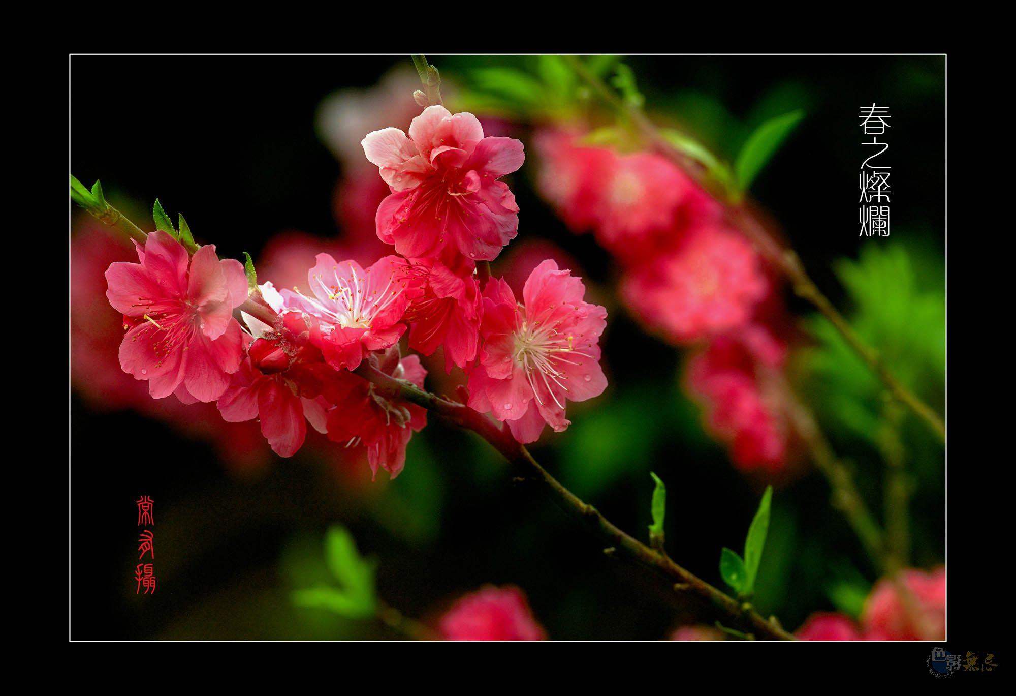云中龙舞作品:春之灿烂