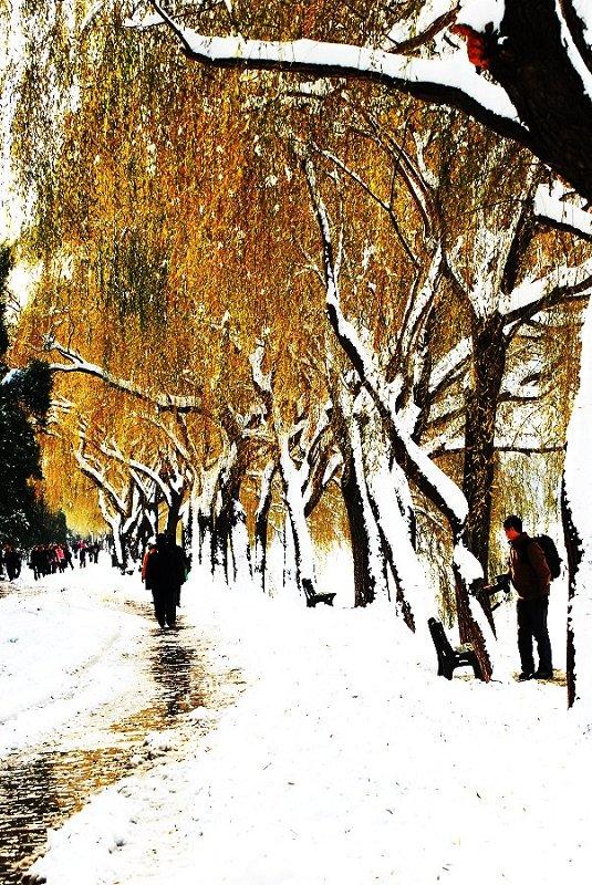 lili5346作品:雪中的小路