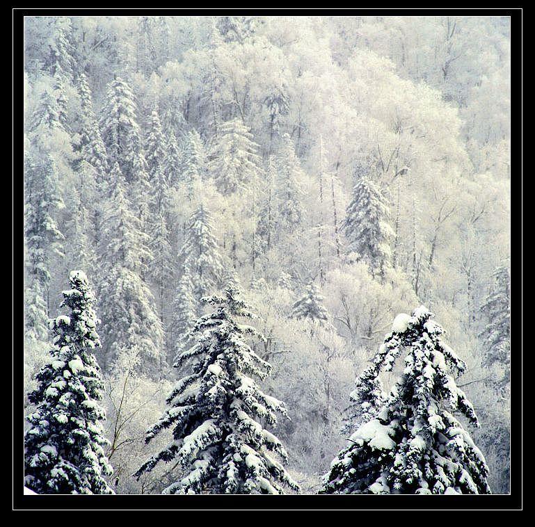 孤影自赏作品:雪淞