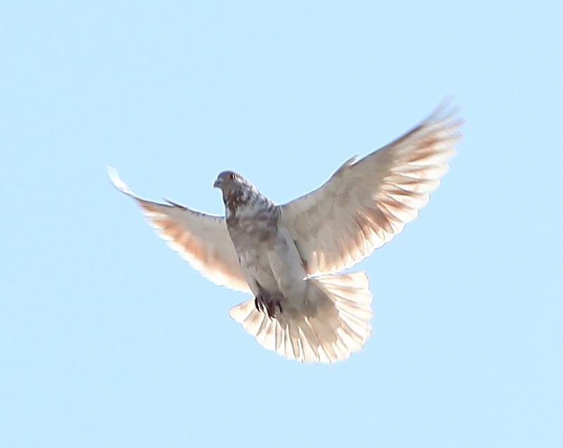 天空辽阔作品:美丽的羽毛