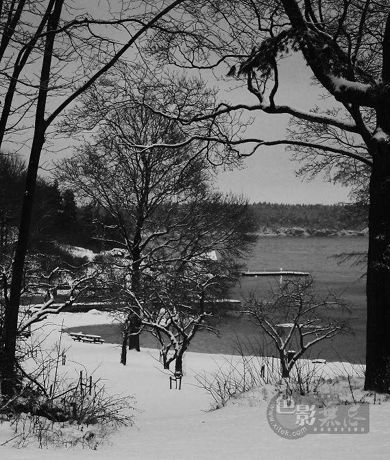 朝露烟雨作品:挪威森林--静