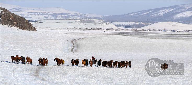 家乡的小河作品:雪原牧马