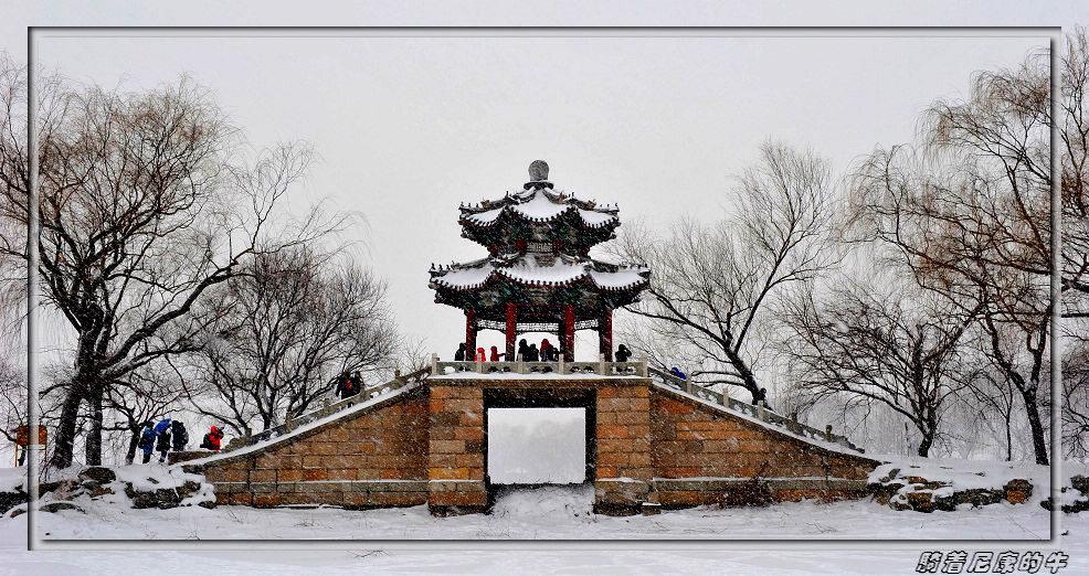 骑着尼康的牛作品:雪中即景
