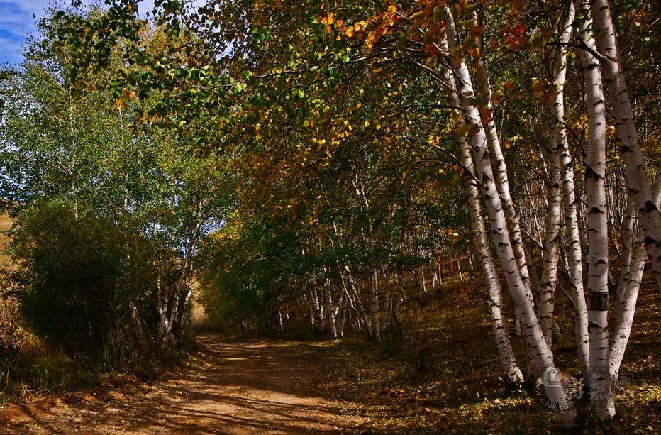 家乡的小河作品:秋色