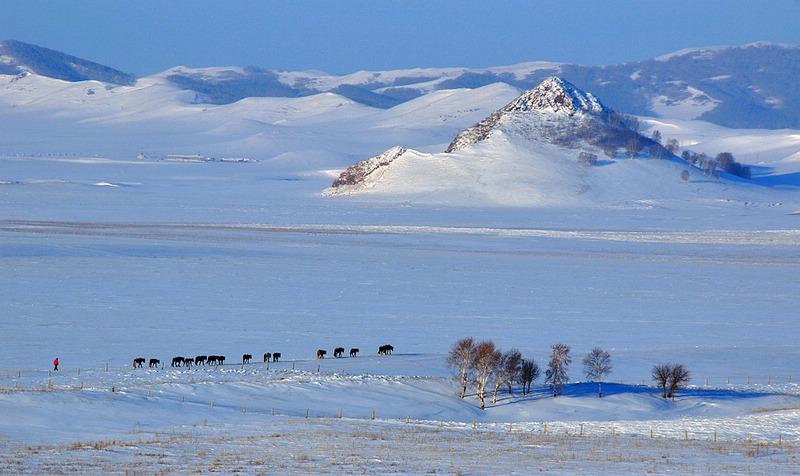 坝上老张作品:冬牧