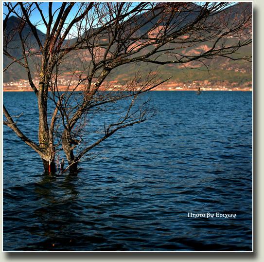 很奇怪生长在水中的树居然