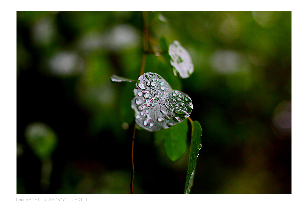 leonyeh作品:雨润